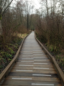 Burnaby Lake boardwalk