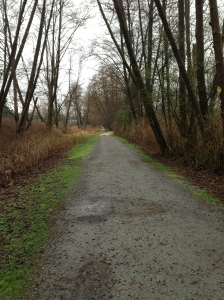 Burnaby Lake trail
