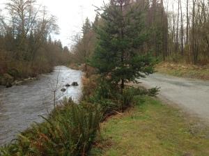 Brunette River trail